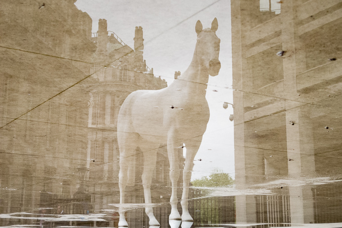 52 postcards - week 18, White horse standing